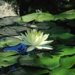 ベトナム映画『青いパパイヤの香り』にみるどこまでも透明な官能性。