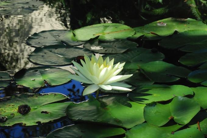 flower-74136_1280