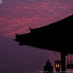 勝手に5選、生粋の奈良県民が考える蛍観賞おすすめスポット。