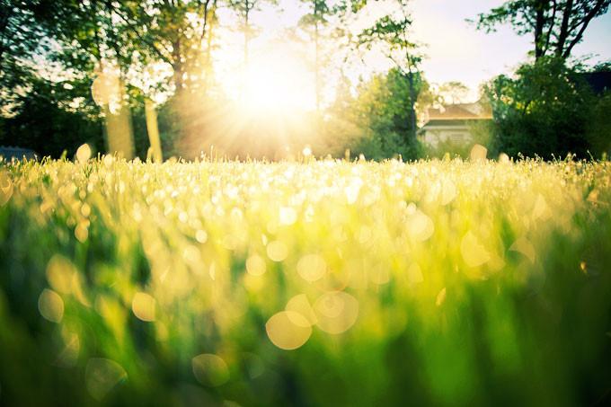 dew-on-grass-788059_1280-1
