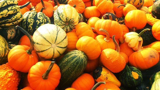 pumpkin-179527_1280