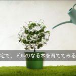 アイハーブを利用して、日本でドルを入手し、貯めていく方法、+11月2日までの10ドル割引セール