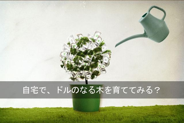イメージ画像_ドル
